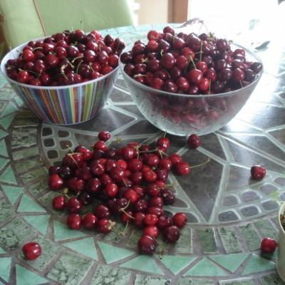 les-cerises-du-jardin.jpg