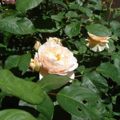 qqs-fleurs-3.jpg