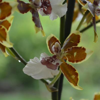 Une fleur au salon